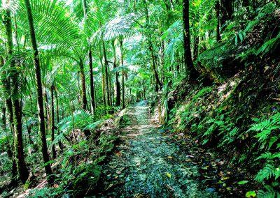 El Yunque National Rainforest Park Trail
