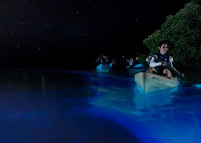 Experience the Bioluminiscent Bay Tour